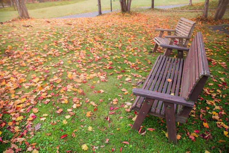 椅子和黄色在庭院秋天季节离开 图库摄影