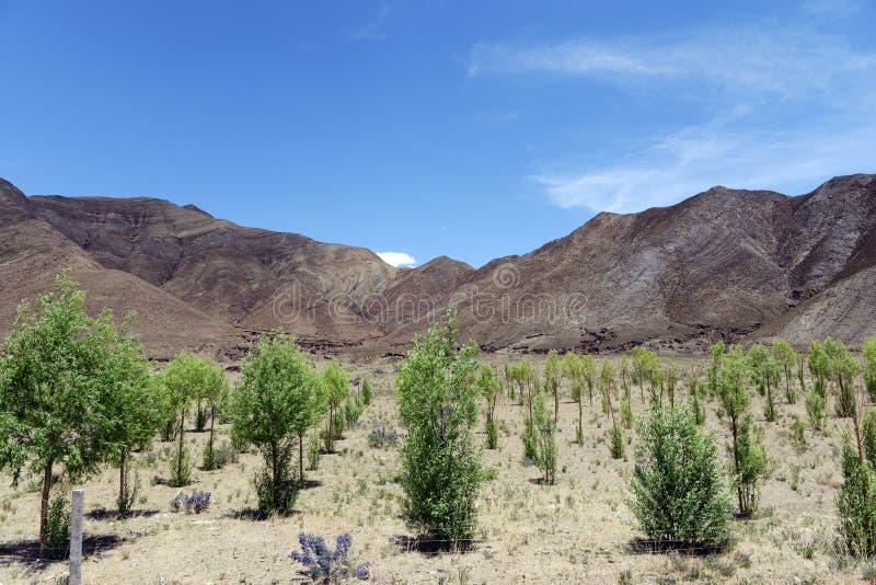 植树造林在西藏 免版税库存图片