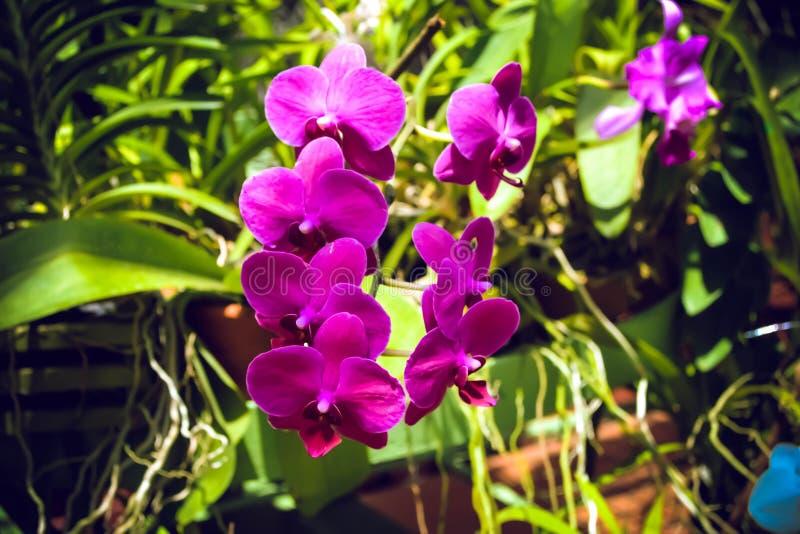 植物、花和棕榈树在康提斯里兰卡植物园里  免版税库存照片