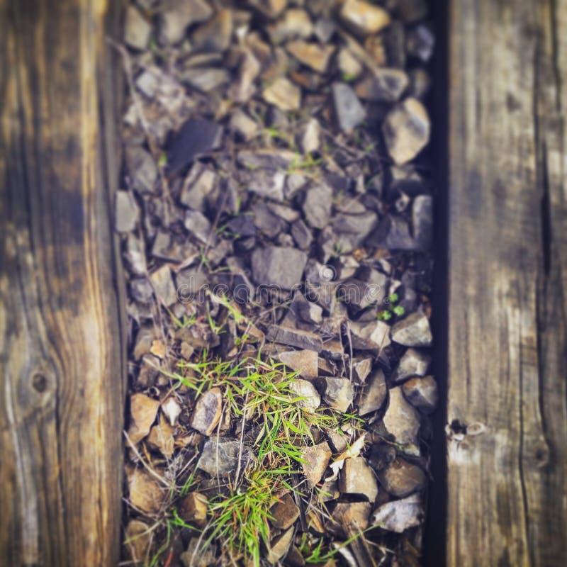 植物、stoun和木头 免版税库存图片