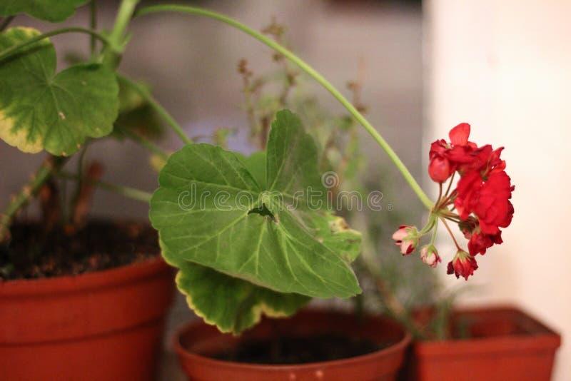 植物世界  免版税图库摄影