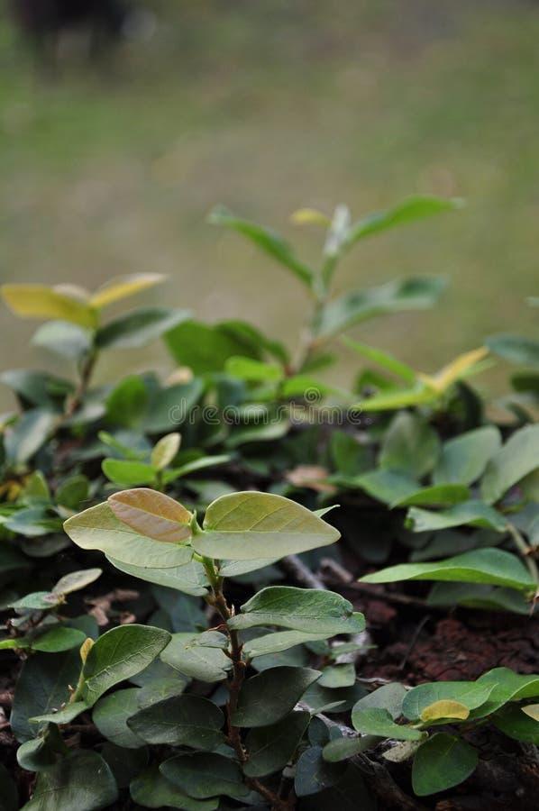 植物叶子墙壁的 库存照片