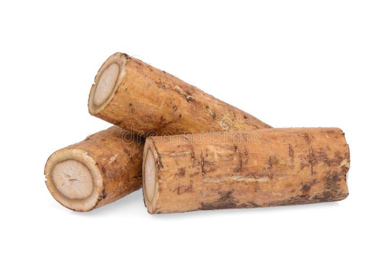 植物名根或kobo在白色 库存图片