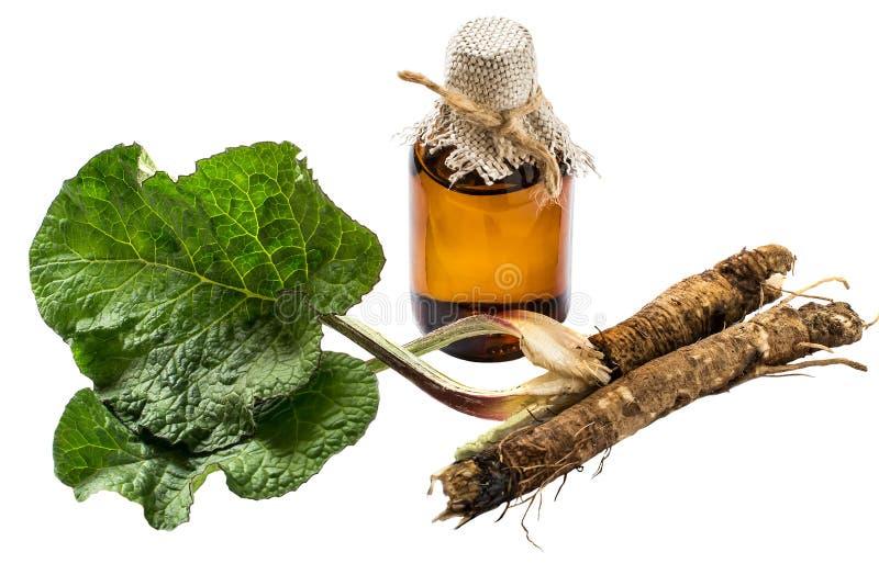 植物名,在瓶的植物名油根和叶子  库存照片