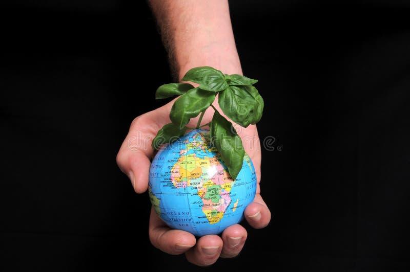 植物和地球 库存图片