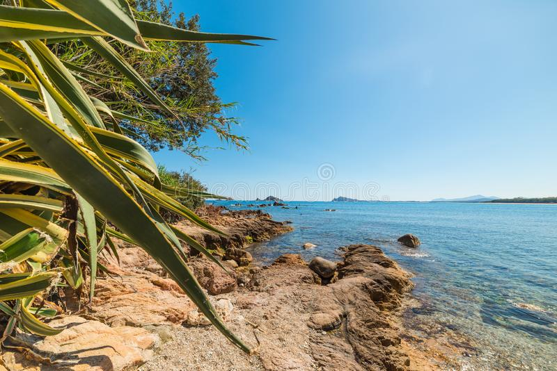 植物和岩石由海在圣玛丽亚Navarrese靠岸 库存图片