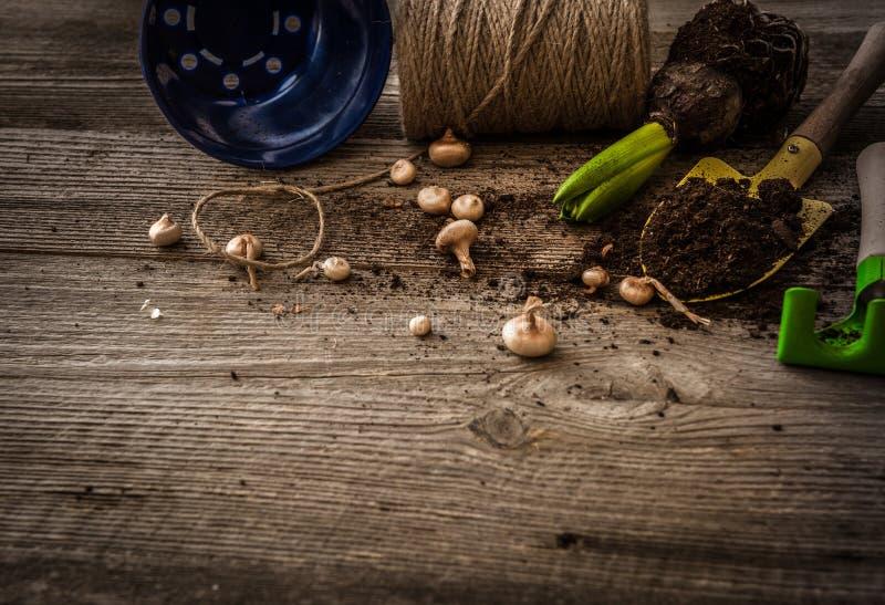 植物和庭院辅助部件的植物 图库摄影