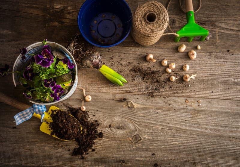 植物和庭院辅助部件的植物 库存图片
