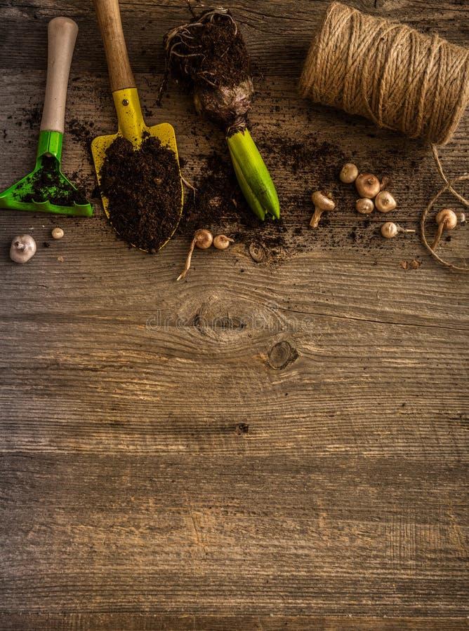 植物和庭院辅助部件的植物 免版税库存照片