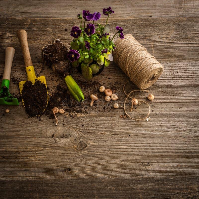 植物和庭院辅助部件的植物 库存照片