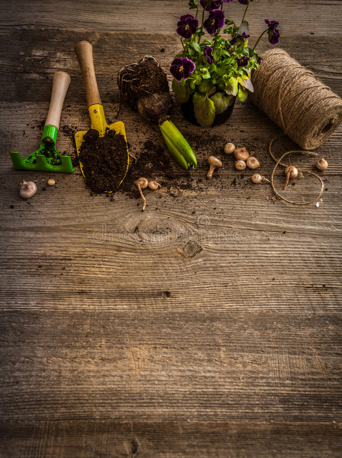 植物和庭院辅助部件的植物 免版税库存图片