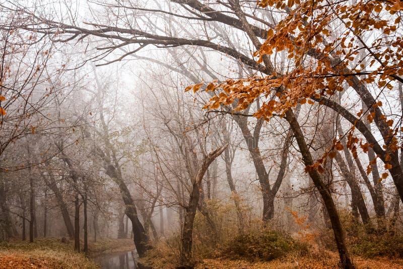 冻植物和树与细节和雾 免版税库存图片