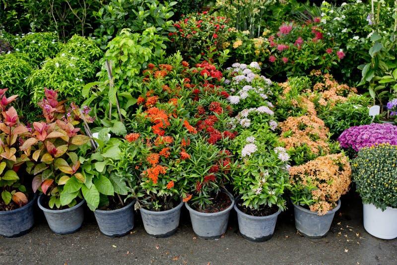植物和树商店从事园艺的 图库摄影