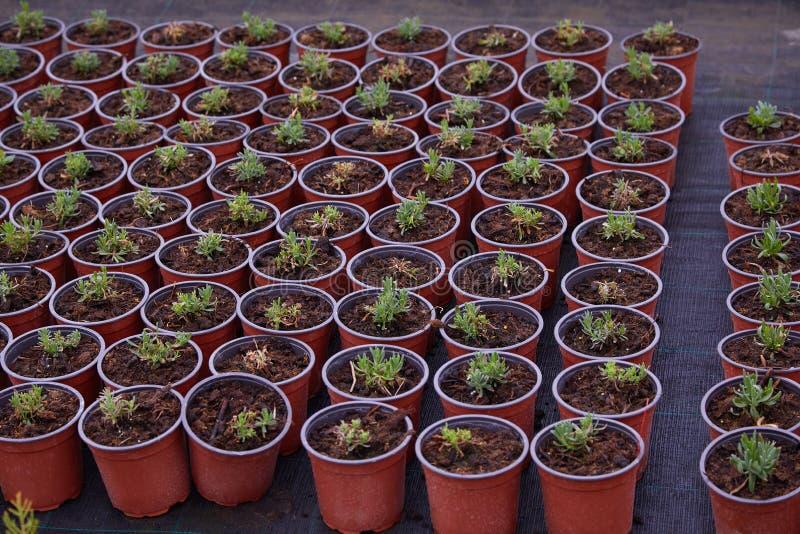植物和树托儿所从事园艺的 免版税库存图片