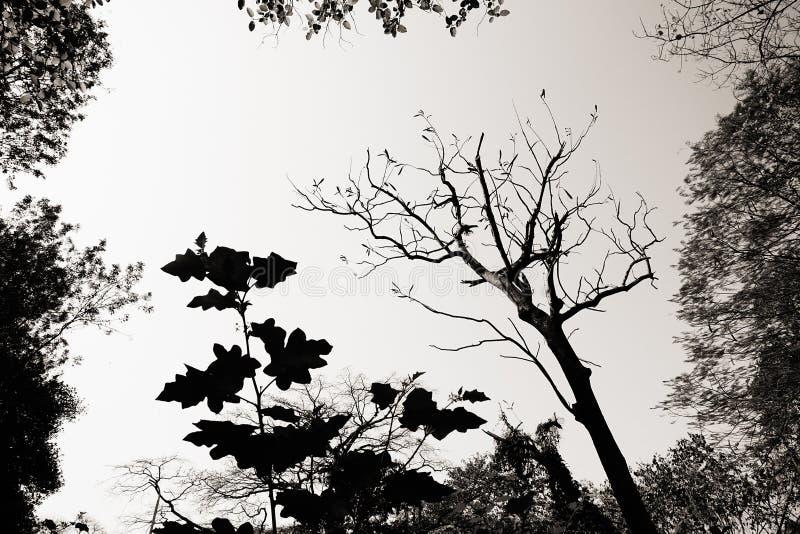 植物的黑白图象 免版税库存图片