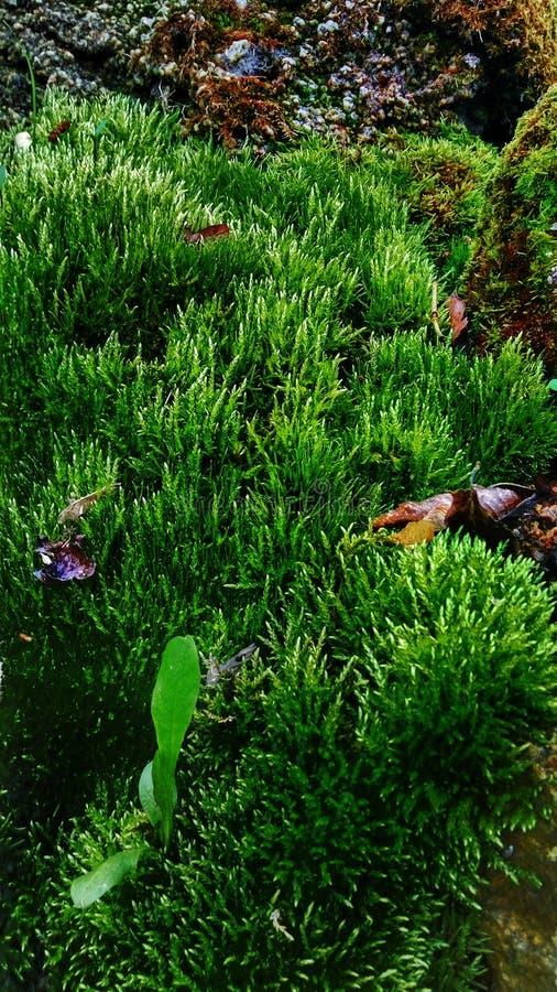 植物和石头 免版税库存照片