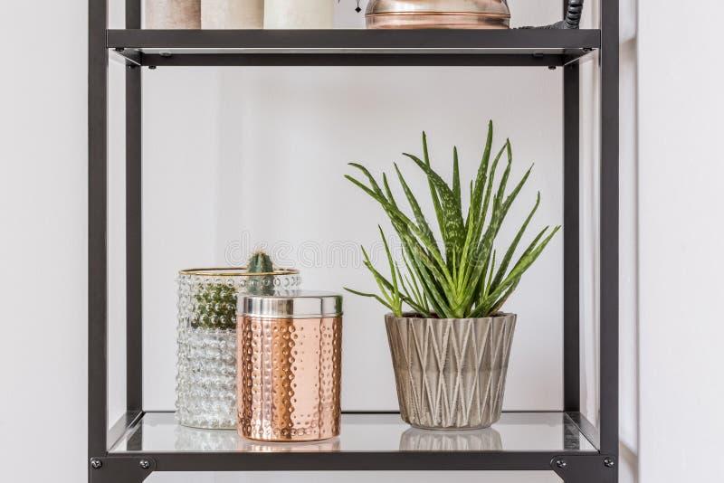 植物和箱子在架子 免版税库存图片