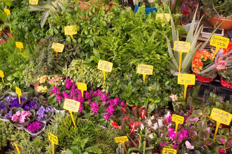 植物和花在温室里面 库存照片