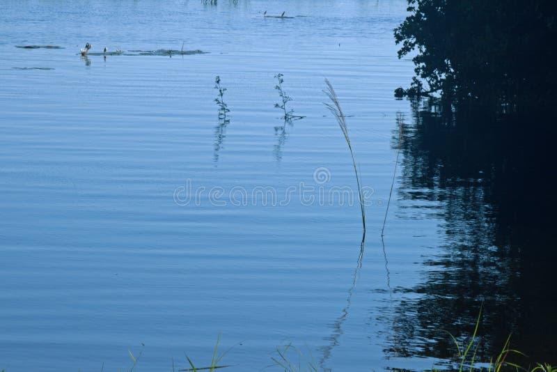 植物和草在推挤在FLOODLINE之外的河 免版税库存照片