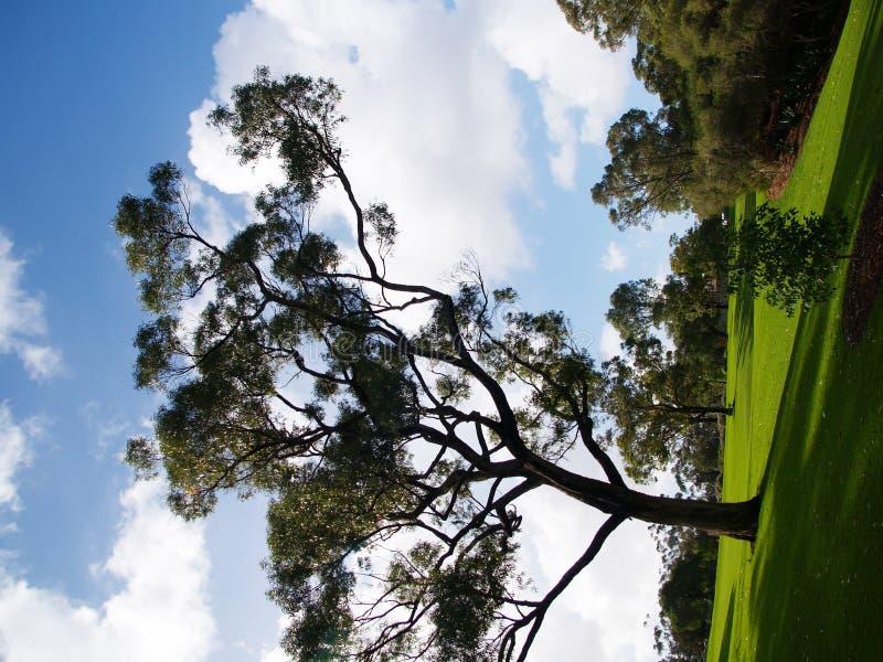 植物园国王公园 免版税库存照片