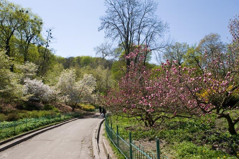植物园基辅 免版税库存照片