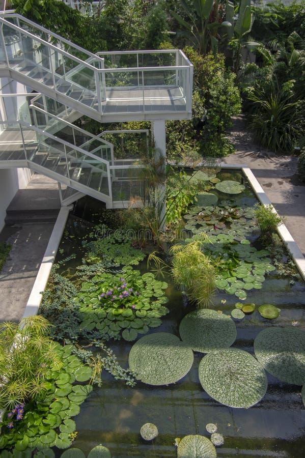 植物园帕多瓦/意大利- 2018年6月16日:令人惊讶的热带绿叶树、灌木和植物有绿色叶子的户内 免版税图库摄影