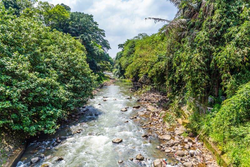 植物园茂物,西爪哇省,印度尼西亚 库存照片