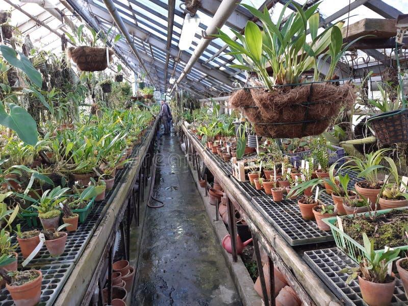 植物园莫斯科 免版税库存图片