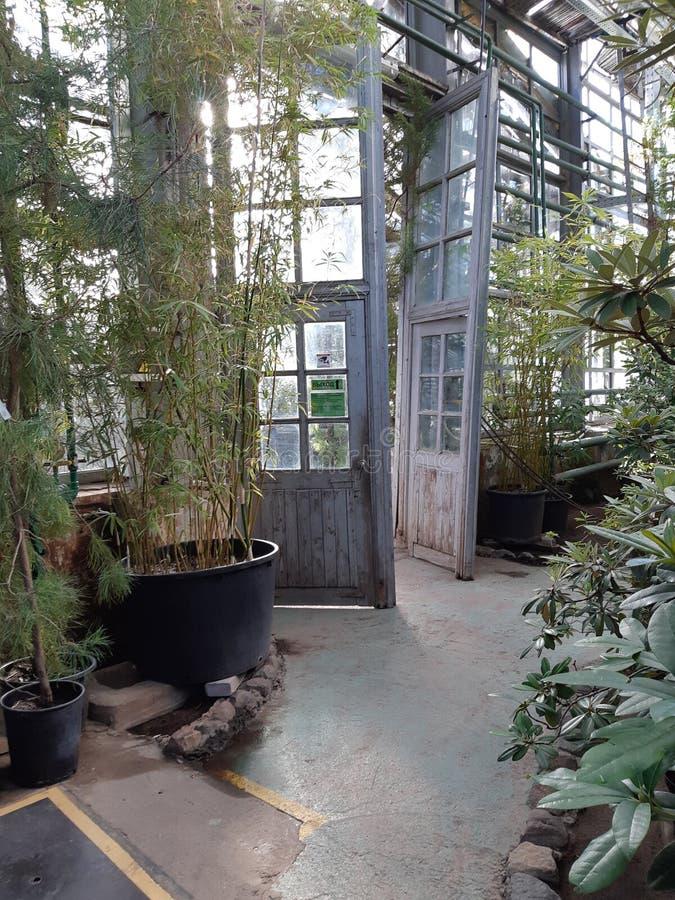 植物园莫斯科 免版税图库摄影