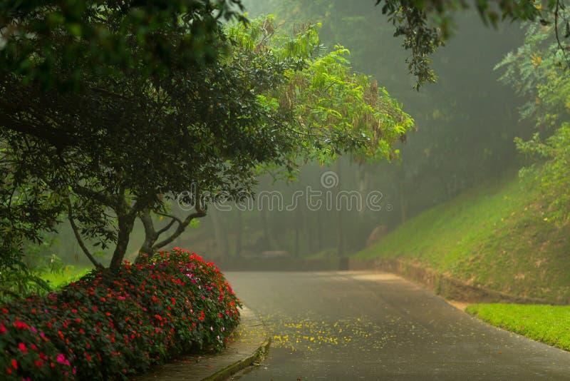 植物园Hakgala 免版税库存图片