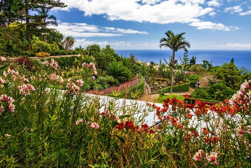 植物园Monte在丰沙尔,马德拉岛,葡萄牙 免版税库存图片