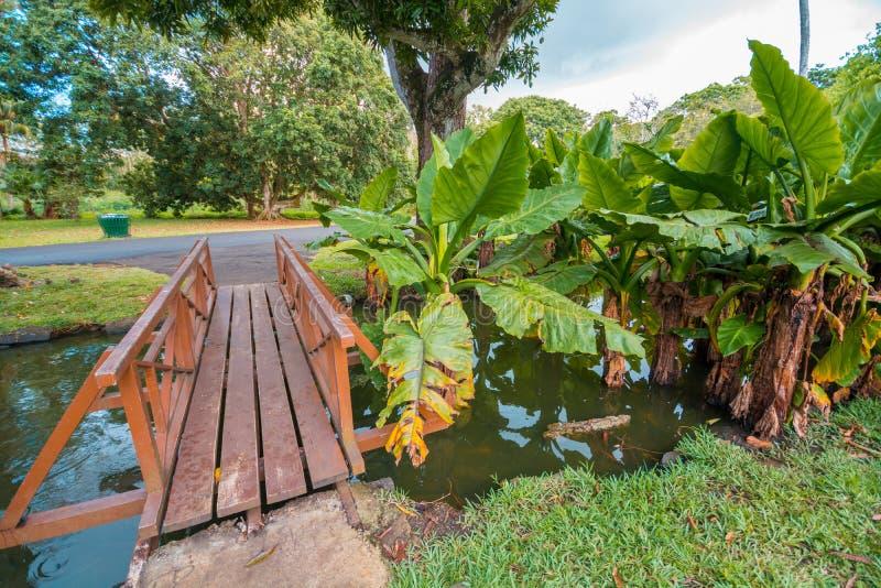 植物园Pamplemousses,毛里求斯 免版税图库摄影