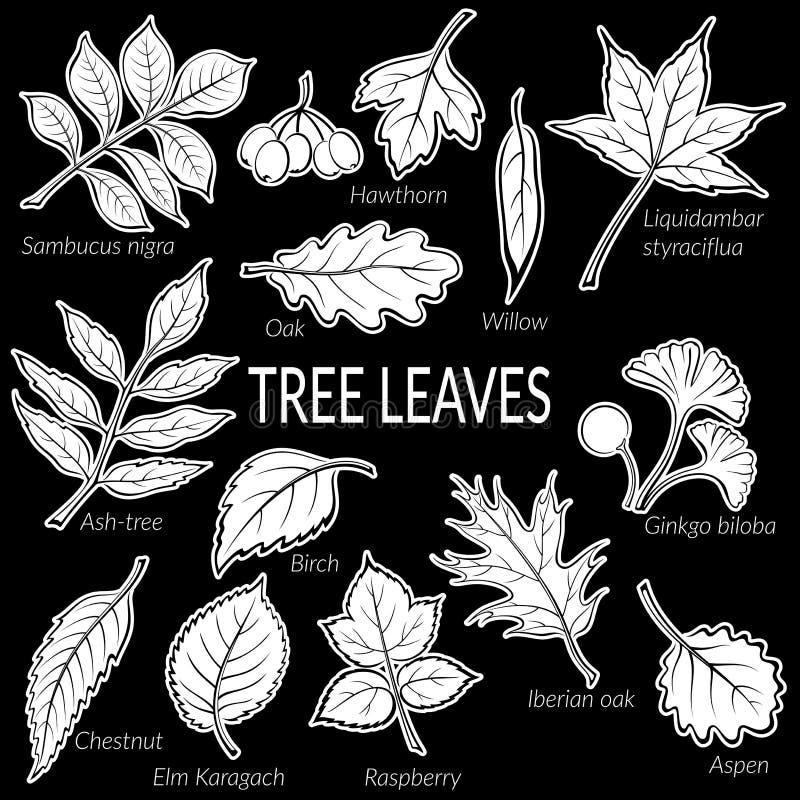 植物图表集合叶子  向量例证