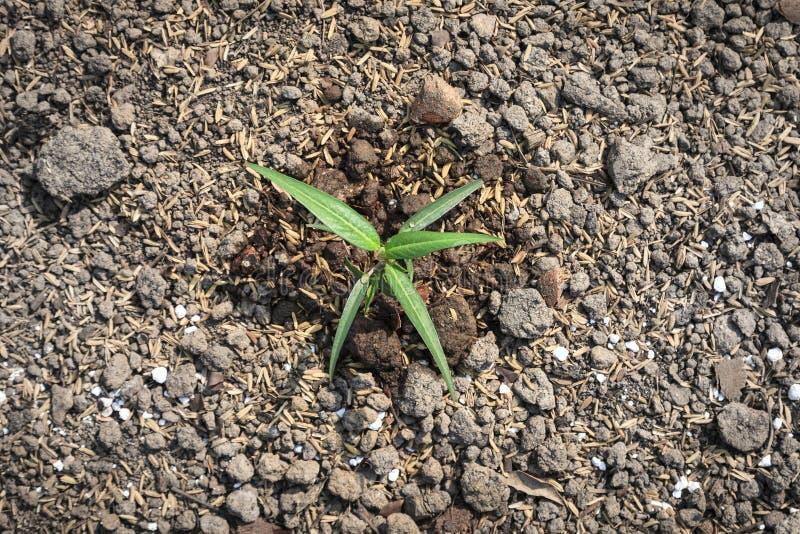 植物在土壤地面增长 免版税库存图片