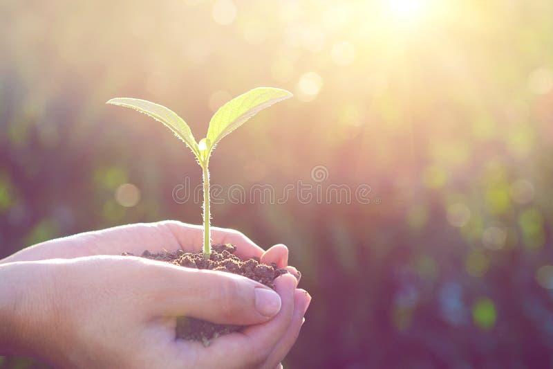 植物在手上 图库摄影