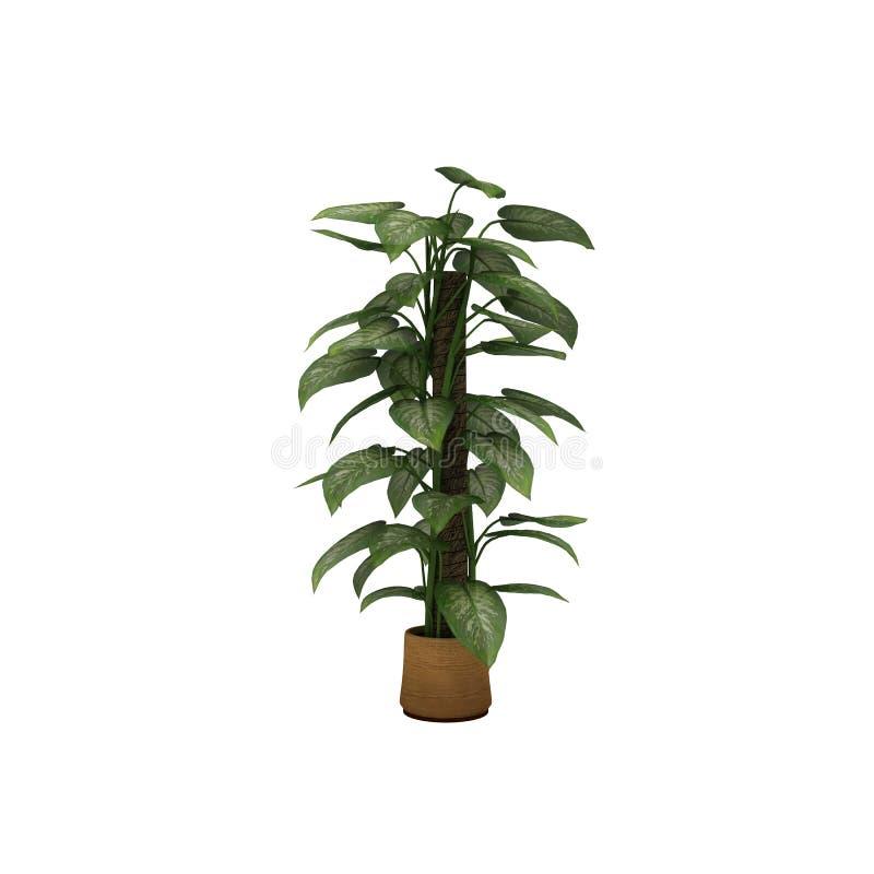植物在棕色罐白色背景中 库存图片