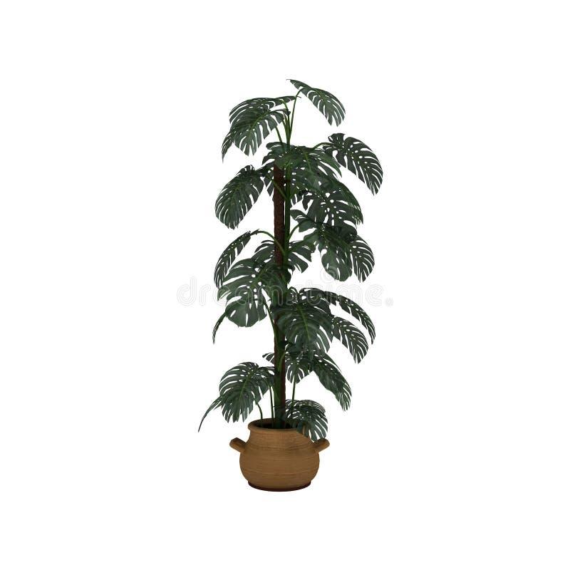 植物在棕色罐白色背景中 库存照片