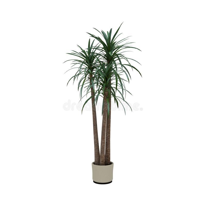 植物在罐白色背景中 库存图片
