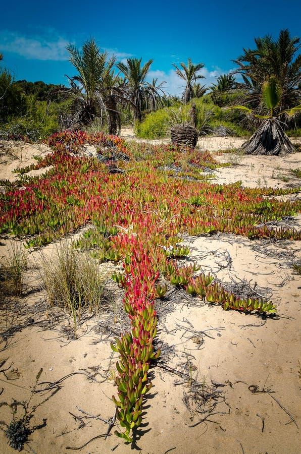 植物地中海 免版税图库摄影