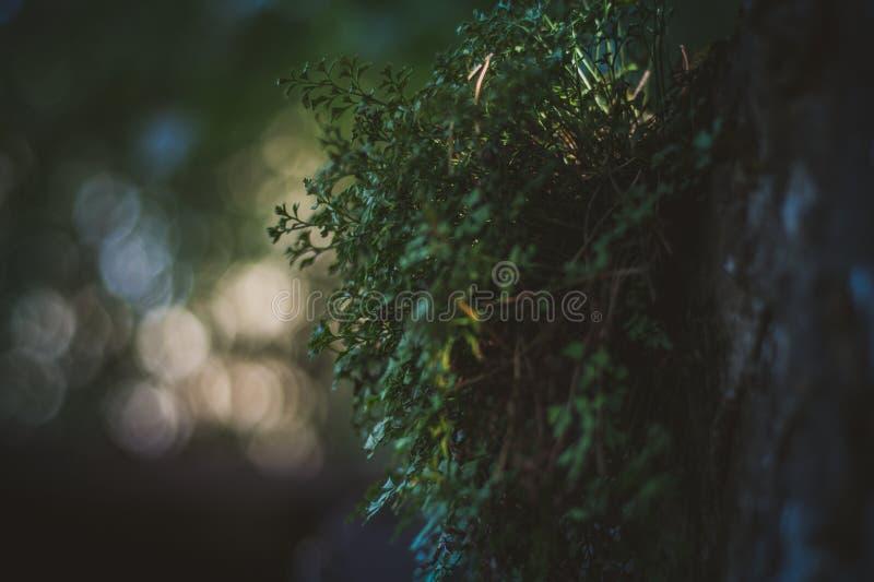 植物增长在一个混凝土墙,与小景深的一张照片外面,好的bokeh 免版税库存照片