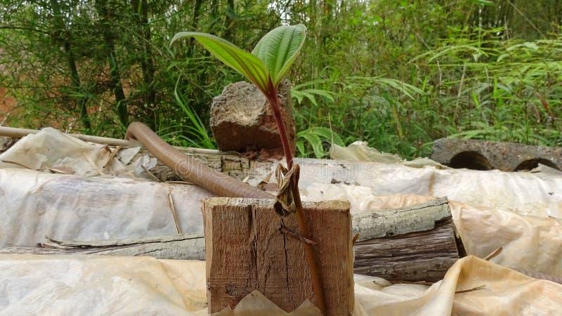 植物增长顽强 图库摄影