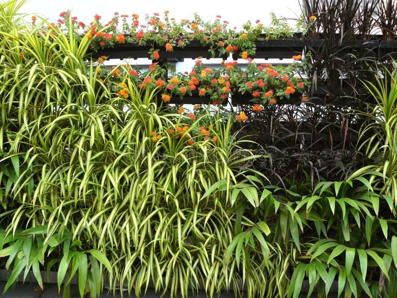 植物天沟的垂直的庭院 免版税库存图片