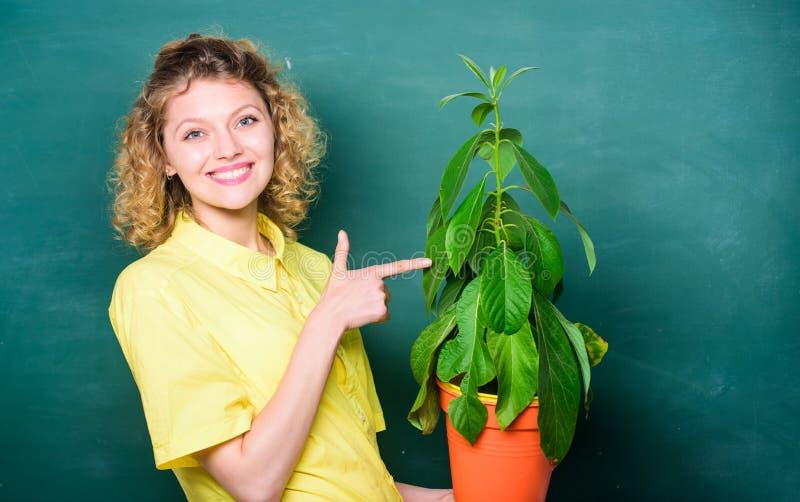 植物学是关于植物花和草本 采取好关心植物 卖花人概念 女孩罐的举行植物 植物那 库存照片