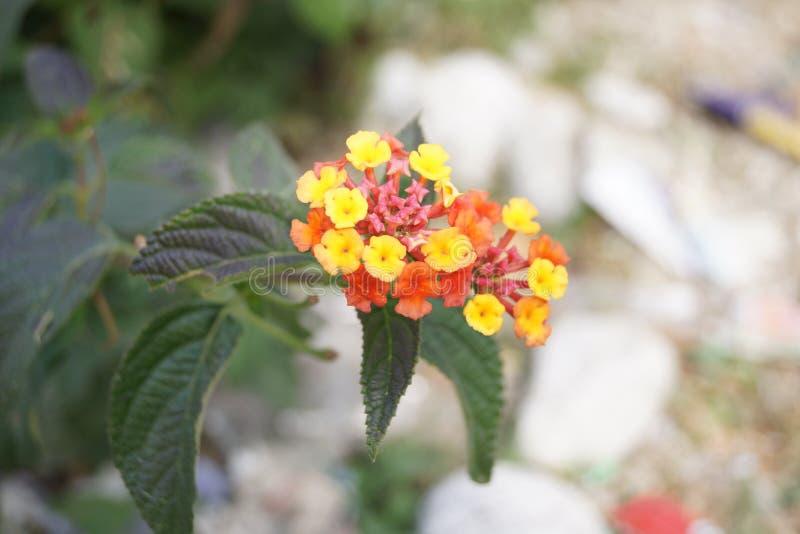 植物宏指令 免版税图库摄影