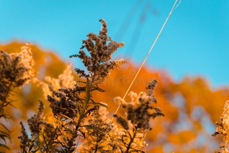 植物宏观射击在秋天期间的远足 免版税库存图片