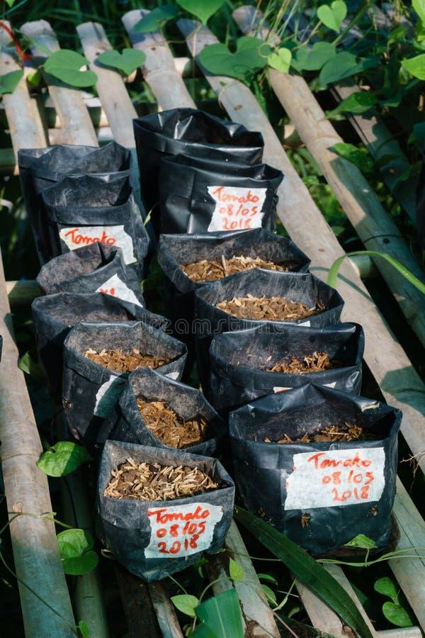 植物幼木预期移植的 库存图片