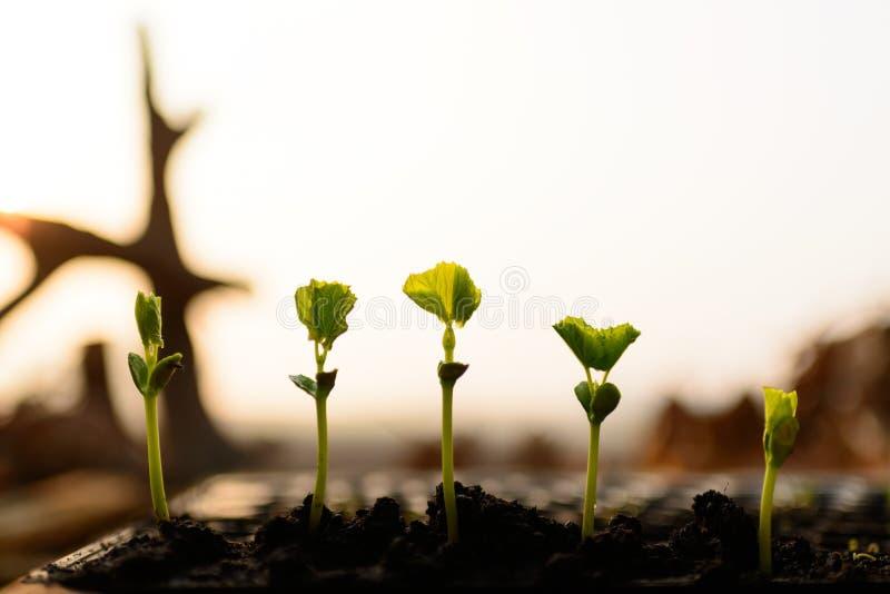 植物幼木 库存照片