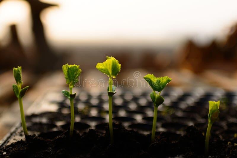 植物幼木 免版税库存照片