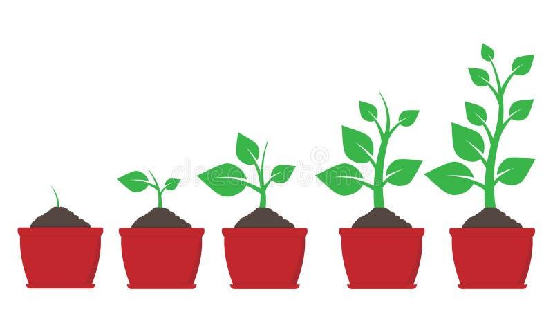 植物成长罐的 也corel凹道例证向量 库存例证