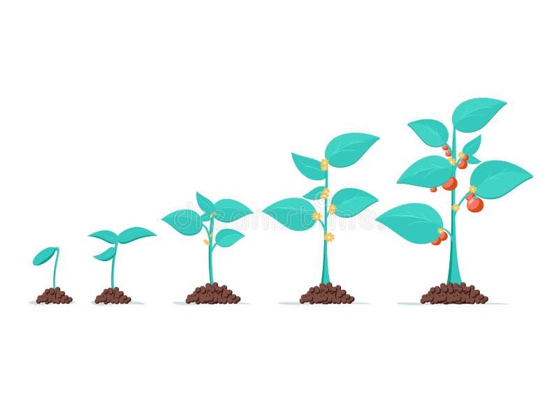 植物成长,从新芽到菜 种植结构树 幼木庭园花木 种子时间安排图片